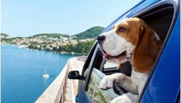 Here are some useful tips to make sure your Dog has the safest and enjoyable experience during road trip